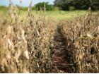 Há pelo menos dez anos País bate seguidos recordes na produção de grãos, puxada pela soja, que hoje seca