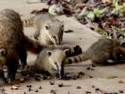 São várias as espécies que moram no Parque dos Poderes, como quatis, capivaras, lobinhos e aves