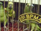 A PMA orienta para que as pessoas que possuam animais ilegalmente procurem os órgãos ambientais para fazerem a devolução espontânea