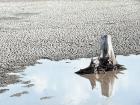 Comemorado em 22 de março, data oficial da ONU, o Dia Mundial da Água estimula e destaca soluções para racionalizar o consumo e preservar os mananciais hídricos