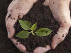 """A cartilha """"Diversão com o time dos nutrientes das plantas"""" trata de três importantes elementos: o nitrogênio, o fósforo e o potássio"""