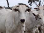 O abate de suínos também caiu na comparação de 2017 com 2016, a redução chega a 18% no período
