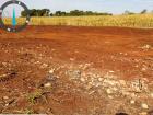Desmatamento e exploração ilegal de madeira em Dourados