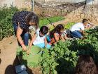 A grande estrela dos cuidados diários é a horta escolar, antes cuidada, diariamente, pelos 160 alunos; o espaço agora ficou sob a responsabilidade exclusiva dos professores.