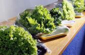 Tecnofam quer proporcionar o contato dos agricultores familiares com soluções tecnológicas