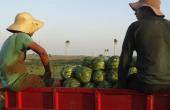 """""""Tecnologias e conhecimentos para agricultura familiar"""" serão discutidos em abril na Tecnofam 2018"""