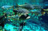 Exposição sobre peixes do Pantanal busca conscientizar sobre importância da conservação