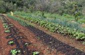 Gigantes do agro se unem para fomentar tecnologias
