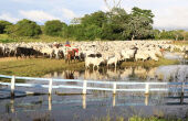 Cerca de 61% das propriedades economicamente ativas em MS são da agricultura familiar