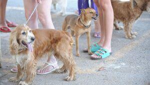 Abandonar ou maltratar animais é crime