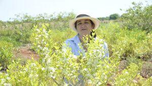 Com cerca de um hectare de terra dedicada à guavira, a pesquisadora esclarece as razões da modéstia proporção