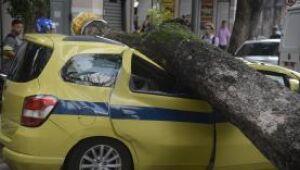 Rio de Janeiro - Árvore cai sobre carro, no centro, após forte temporal que atingiu a capital fluminense na madrugada ( Tomaz Silva/Agência Brasil)