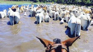 Os pantanais do Paiaguás e Nhecolândia, mais ao Norte, estão debaixo de água, segundo os pantaneiros