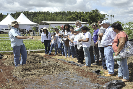 """""""Um trabalho convencional chega a custar mil reais, isso em uma área de um hectare, enquanto que com a adubação verde o custo cai para R$ 200"""", informa"""