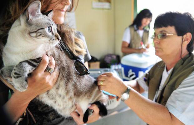 Campo Grande vai ganhar Hospital Veterinário e Centro de Triagem de Animais