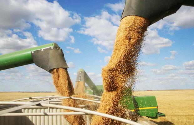 Colheita da soja está quase finalizada no Estado com produção recorde