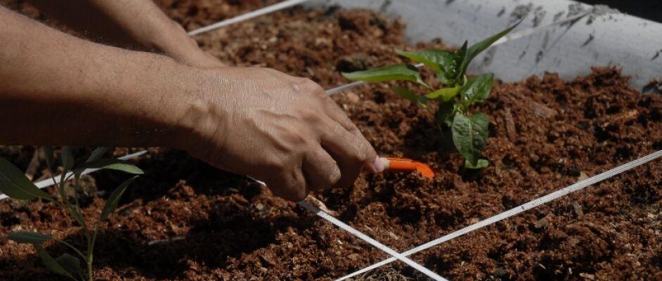 MS deve receber projeto de apoio à agricultura urbana