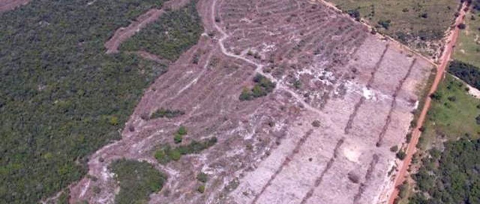 Princípio do fim? Desmatamento desenfreado ameaça principal fonte de recursos do município de Rio Verde