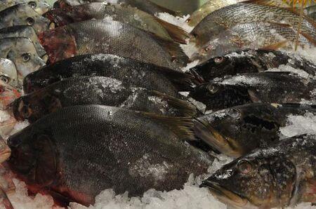 De acordo com o IBGE, em todo o Estado, foi registrado um salto de 30% na produção de peixes em 2019, quando comparado a igual período de 2018