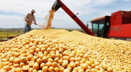 Produtividade de soja em MS