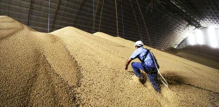 No ranking nacional, MS permanece como o 5º maior produtor e 6º maior exportador de soja em grãos, correspondendo a 9% e 5% de participação, respectivamente