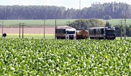 MS registra o 2º maior crescimento de produção de grãos do Brasil