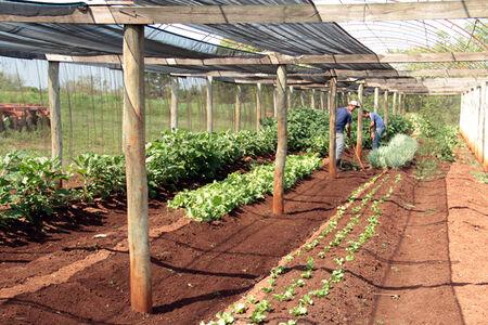 O projeto também deve fortalecer o Cinturão Verde, suprindo a deficiência no abastecimento dos hortifrutigranjeiros em Campo Grande