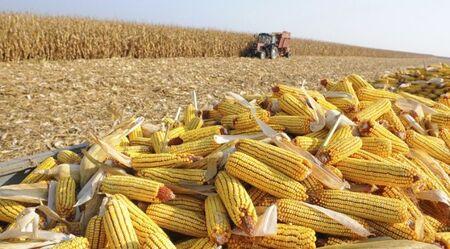 Governo do Estado investe R$ 3 milhões em pesquisas relacionadas às culturas da soja e milho