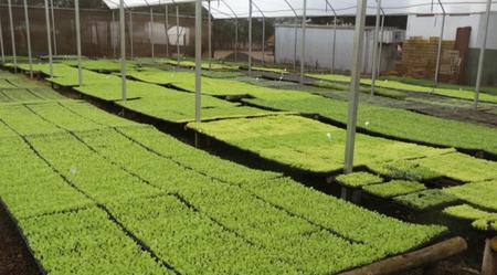 Dados do último Censo Agropecuário revelam que os principais alimentos produzidos pelos pequenos agricultores no Estado são mandioca (77%), café (68%) e feijão (56%)