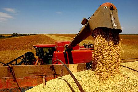 Na cultura de milho, as duas cidades ainda somaram 1,6 milhão de tonelada, com destaque para Ponta Porã, fronteira com o Paraguai, responsável por grande parte dessa produção – 1,1 milhão de tonelada