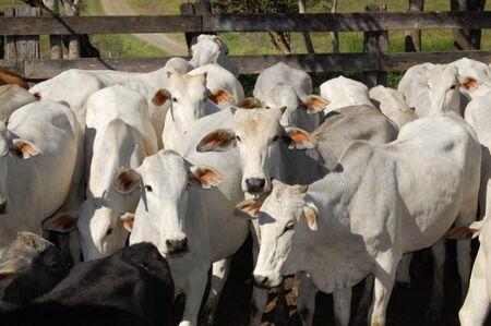 Com a mudança de 5 ml para 2 ml, a expectativa é de que diminuam as ocorrências de reação nos animais