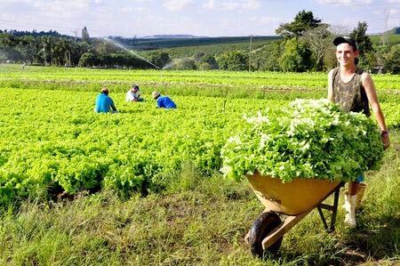 O FCO Rural é destinado a investimentos no agronegócio como a construção de armazéns, aquisição de máquinas e equipamentos agrícolas, até o financiamento de lavouras