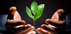 Capacitações sobre cidadania e sustentabilidade serão realizadas via plataforma virtual.