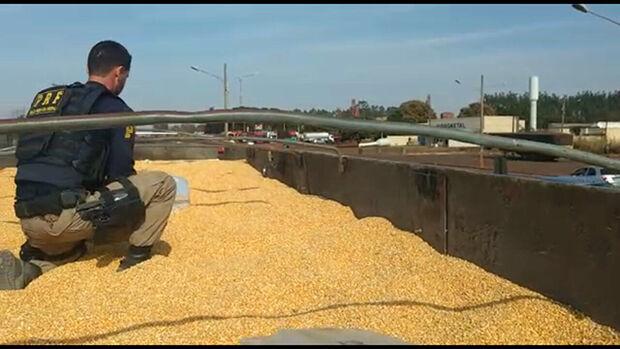 Policial verifica maconha escondida entre a carga de milho