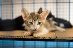 Animais disponíveis para adoção no CCZ. (Foto: Elivelton Almeida)