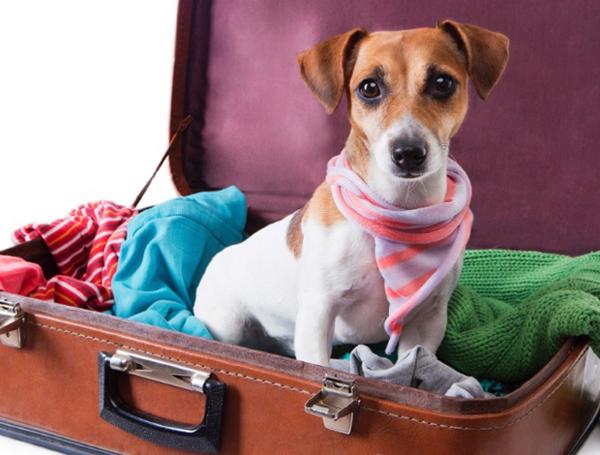 Quando a viagem é para o exterior as exigências são maiores e determinadas pelas autoridades dos países de destino.