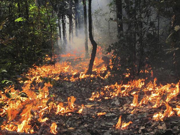 Neste sentido, sustentam que uma situação de secas extremas recorrentes durante o presente século poderia minar os avanços conquistados na redução das emissões derivadas do desmatamento nesta região