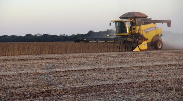 Conforme os dados, a colheita atingiu 1,95 milhão de hectares da área disponibilizada para o cultivo da oleaginosa, enquanto que o plantio do milho safrinha já soma 61% nos municípios monitorados pelo Siga