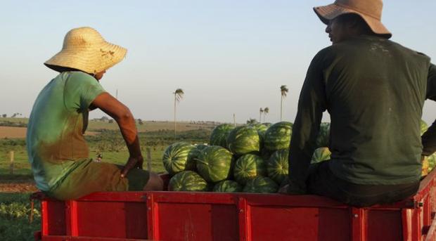 Dados do último Censo Agropecuário revelam que os principais alimentos produzidos pelos pequenos agricultores em Mato Grosso do Sul são mandioca (77%), café (68%) e feijão (56%)