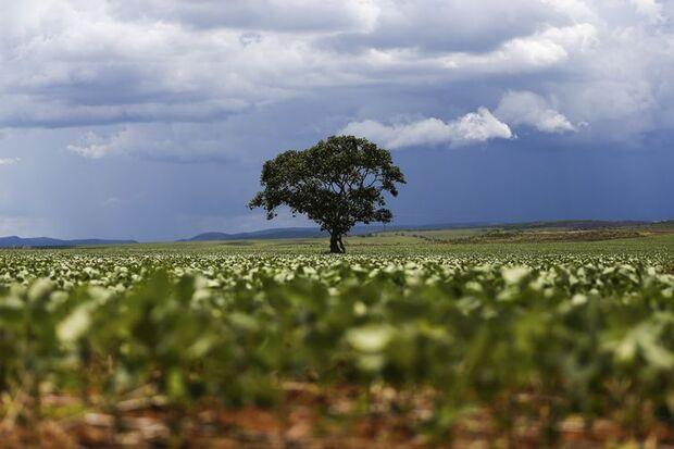 Alto Paraíso (GO) - Plantação de soja em área do município de Alto Paraíso mostra o avanço da fronteira agrícola na região da Chapada dos Veadeiros (Marcelo Camargo/Agência Brasil)/Marce
