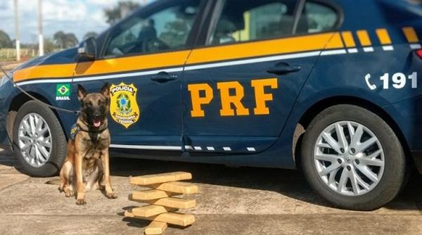 O passageiro e o entorpecente foram encaminhados à Delegacia de Polícia Civil de Campo Grande.