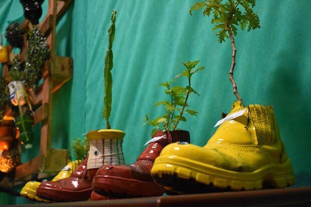 Mudas estão expostas em vasos recicláveis, como botinas velhas, latas e garrafas pet