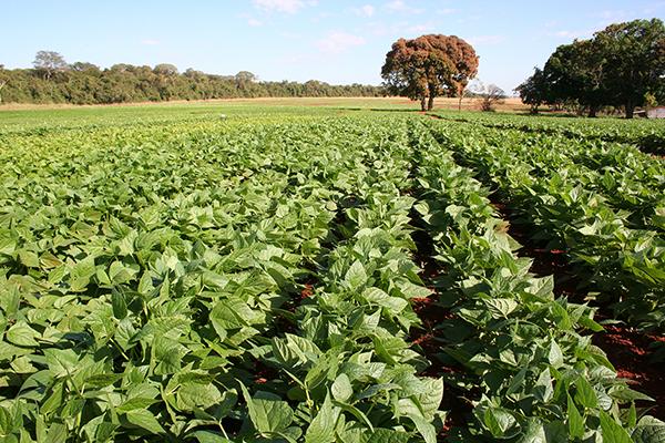 O programa ainda traz a Agenda Rural com informações sobre os principais eventos que movimentam o setor agropecuário no Estado e no País.