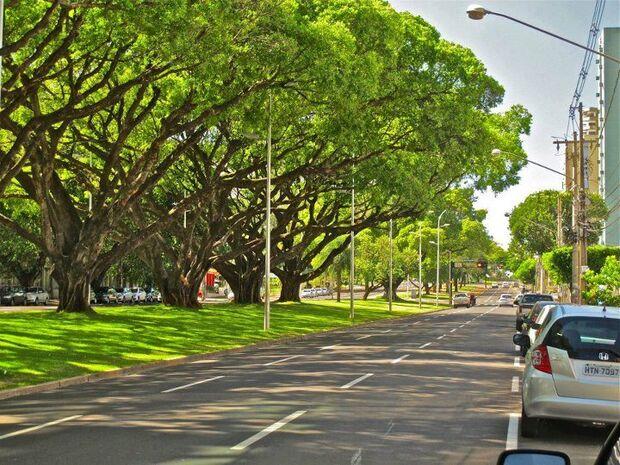 Campo Grande continua sendo a mais arborizada entre as capitais do país, com percentual de 96,30%. Entre os municípios do Estado, a Capital aparece em 39° lugar