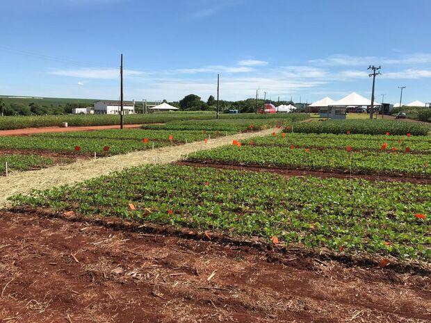 O objetivo é que os agricultores conheçam alternativas viáveis para a produção, visando melhor eficiência e mais produtividade no campo
