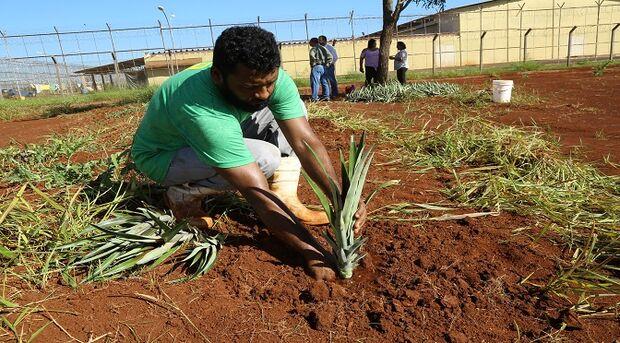 Segundo a secretária de Agricultura Familiar, Kallen Christiany Miranda Ferreira,  a iniciativa vem para fomentar a produção na horta
