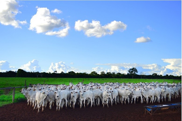 A nova vacina já estará disponível aos produtores rurais na primeira etapa de vacinação do rebanho, em maio deste ano, período em que os animais de todas as idades devem ser vacinados no Mato Grosso do Sul