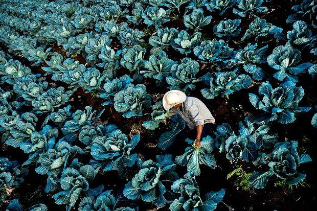 CNA desenvolveu o Agri Trace Rastreabilidade Vegetal