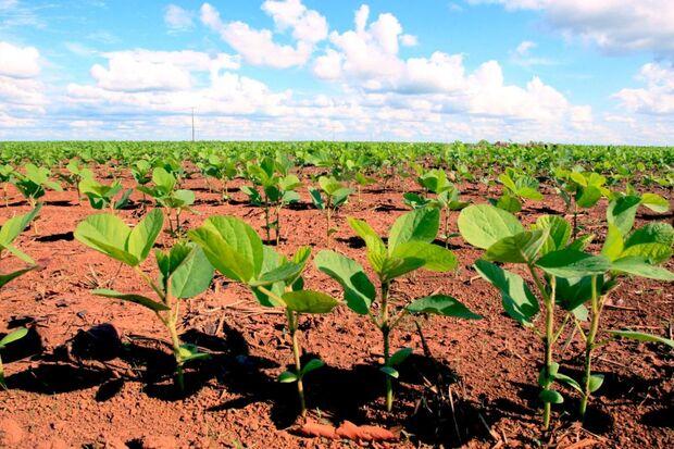 Em Mato Grosso do Sul, a ferrugem asiática, considerada uma das doenças mais severas que incidem na soja, está sob controle