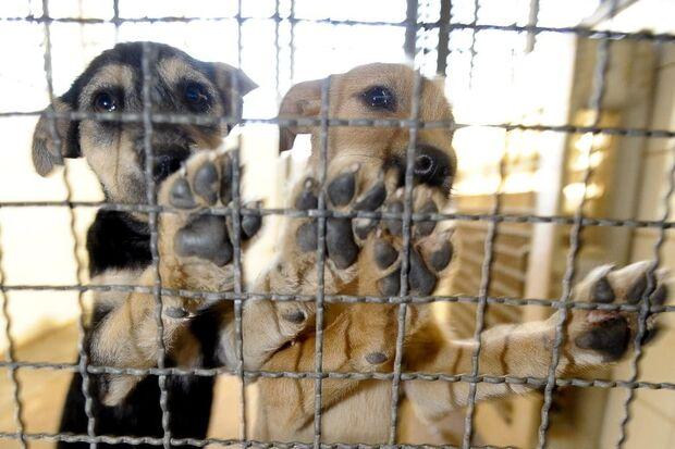 O objetivo do texto é criar condições para que os estabelecimentos públicos de controle de zoonoses adotem práticas menos cruéis para controlar o número de cães e gatos que vivem na rua